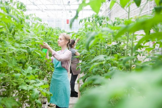 種子の生産方法