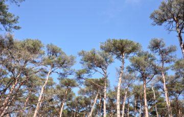 松林の写真