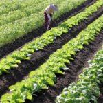 畑で作業する農家さん