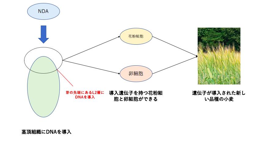 iPS法の概要