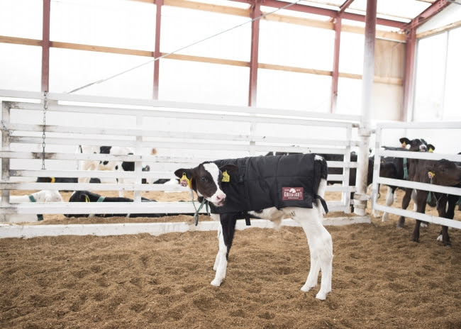 仔牛の画像