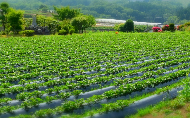 ワタミファーム大分農場