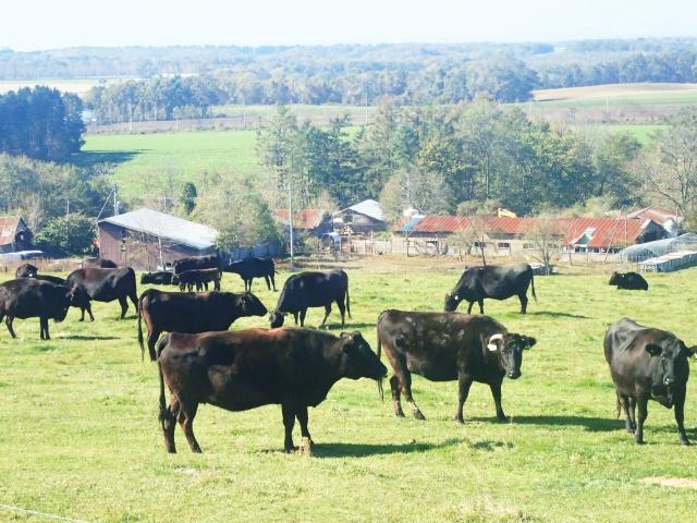 和牛の様子