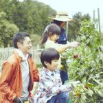 家族で家庭菜園