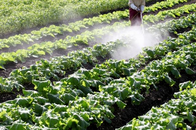 農薬散布の様子