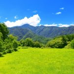 日本の森林