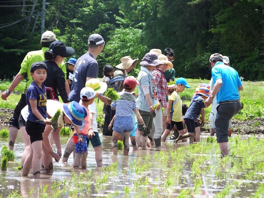 家族での田植え体験