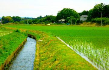 水田横の水路
