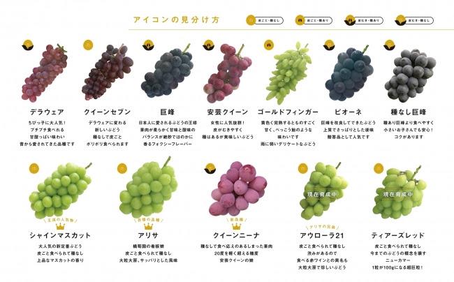 ぶどうの種類