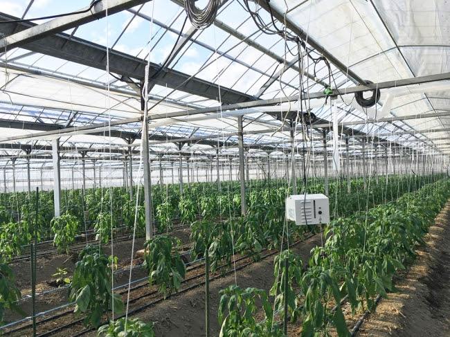 AIやIotを導入した農業